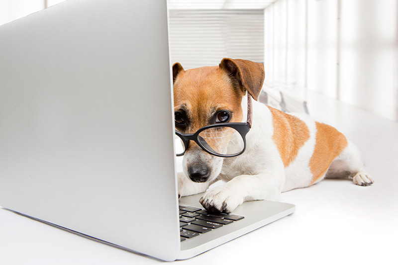 Brainy Dog on a Laptop